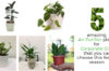 Collage of 5 Air Purifier Plants for Gifting Purpose - Green Decor