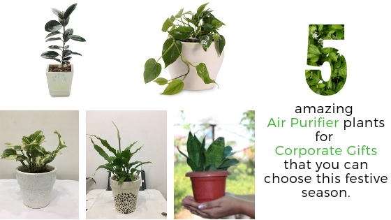 Choose These 5 Best Plants For Air Purification As Eco