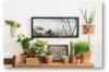 Potted small indoor plants as interior decor accessories - Green Decor