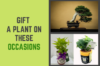 Featured Image for Blog-post on Gifting Plants for Different Occasions by Green Decor
