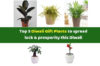 Best gift plants to share luck & prosperity on Diwali by Green Decor
