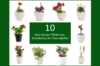 Collage of Best 10 Flower Plants for Your Garden by Green Decor