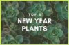 Featured Image for blog-post on Plants for New Year by Green Decor